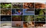 Miasto Mr�wek / City Of Ants (2010) PL.1080i.HDTV.x264 / Lektor PL