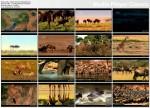 Wielka równina Serengeti / The Great Serengeti (2010) PL.1080i.HDTV.x264 / Lektor PL