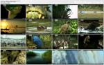 Najdziksza Ameryka £aci?ska / Wildest Latin America (2009) PL.TVRip.XviD / Lektor PL
